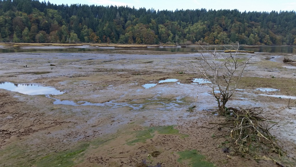 2015-10-16-Nisqually Floodplain